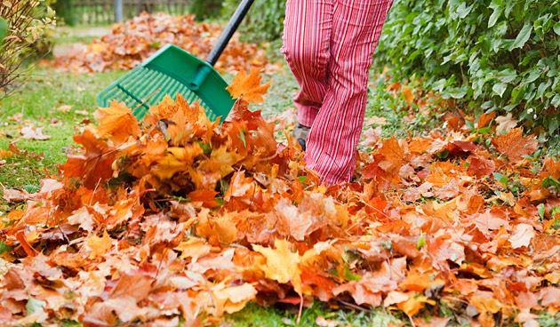 Afgevallen blad van fruitbomen en struiken opruimen