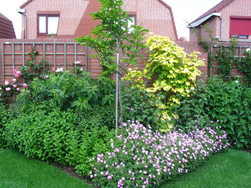 Groenblijvende struiken planten