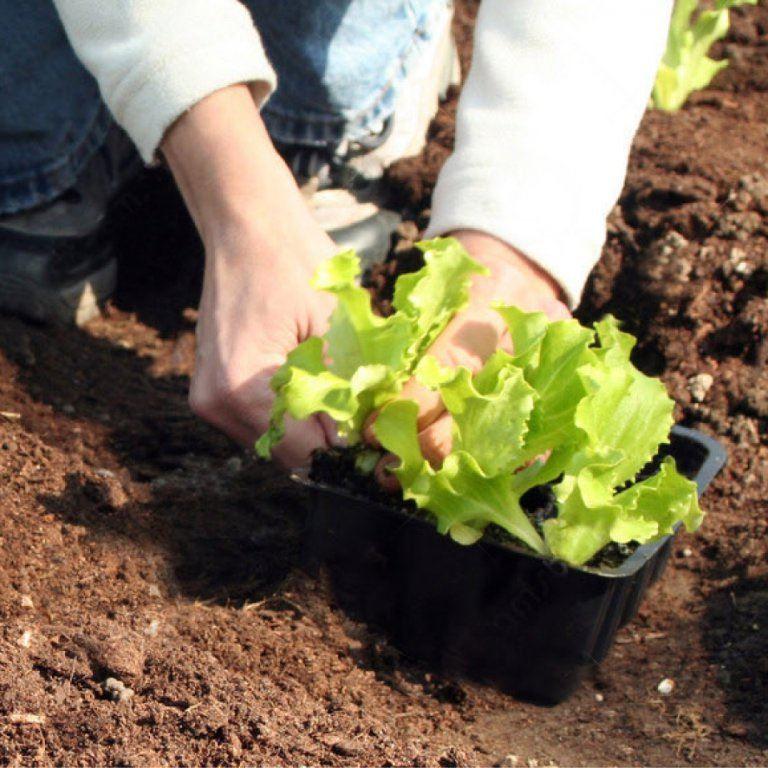 Groenteplantjes nu al beschikbaar