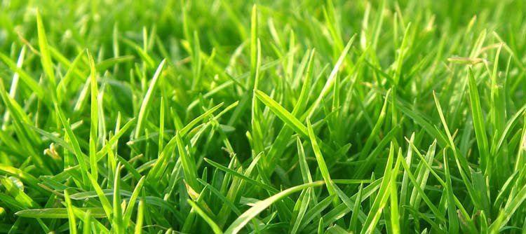 Laatste maal gras maaien