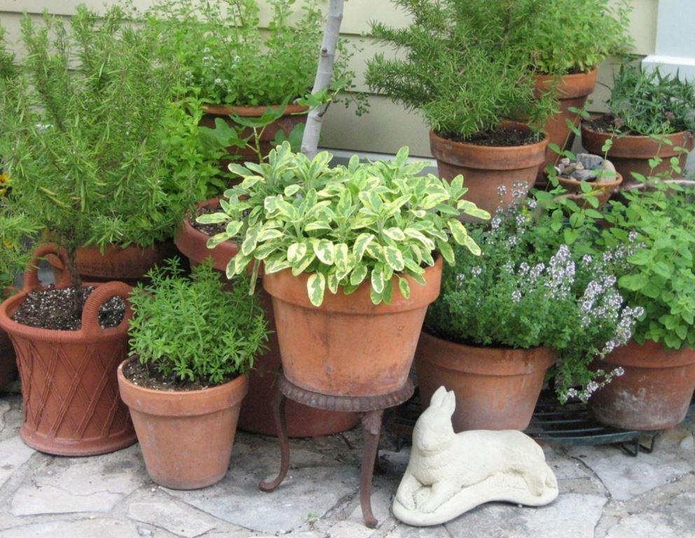 Niet-winterharde potten binnen zetten