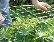 Vallen uw planten soms ook omver?
