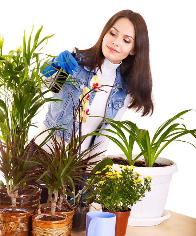 Schoon de planten op