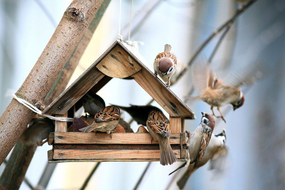 Vogels voeren