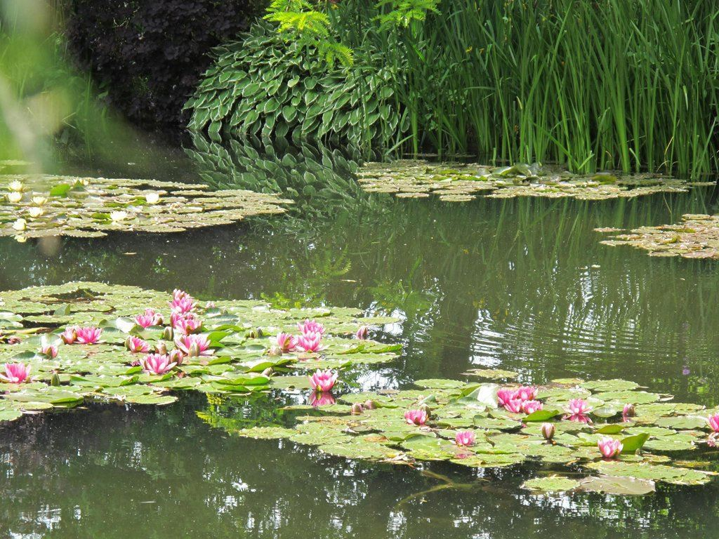 April tuincentrum pelckmans - Livre le jardin de monet ...