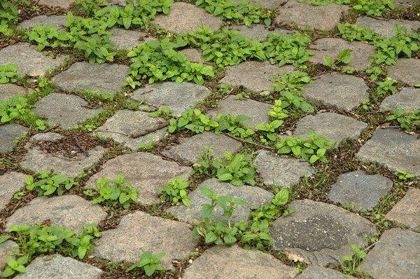 Blijf wieden en bij langdurig droog weer goed sproeien