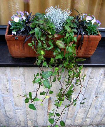Zet winterplanten in je bloembakken