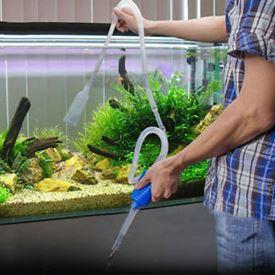 Aquariumonderhoud
