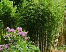 Siergrassen & Bamboe