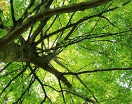 Bomen (overige)