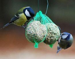 Natuurvogels