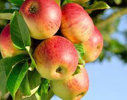 Fruitbomen & Kleinfruit