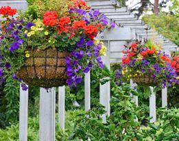 Hanging Baskets & Wandkorven