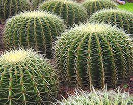 Cactus & Succulenten