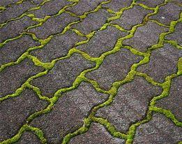 Mos Verwijderen Tegels : Mos groene aanslag tuincentrum pelckmans