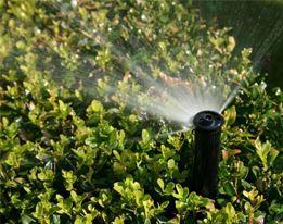 Tuinbesproeiing & Water geven