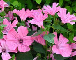 Bodembedekkers & Vaste Planten