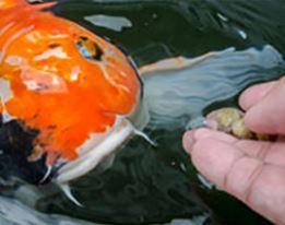Visvoer & -verzorging