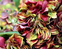 Zijden Bloemen & Kunstplanten